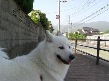 2007_009_8